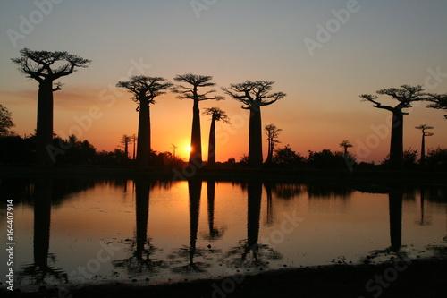 Fotobehang Baobab Coucher de soleil à l'allée des baobabs