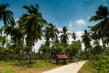 Walking in a coconut field