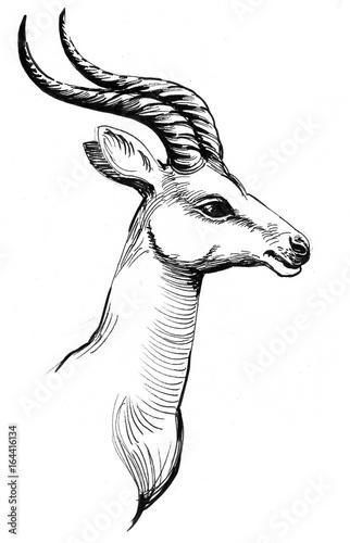 Antelope head - 164416134