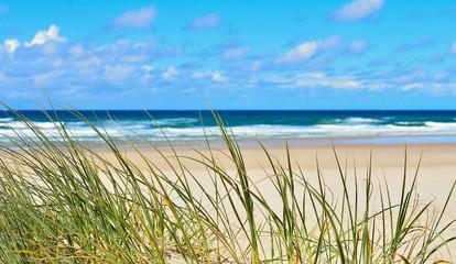 herbes poussant sur les dunes d'une plage landaise © bru