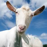 white goat head against blue sky - 164444959