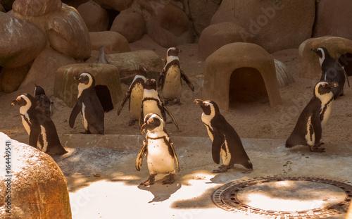 Fotobehang Pinguin Ein Rudel Pinguine im Zoo