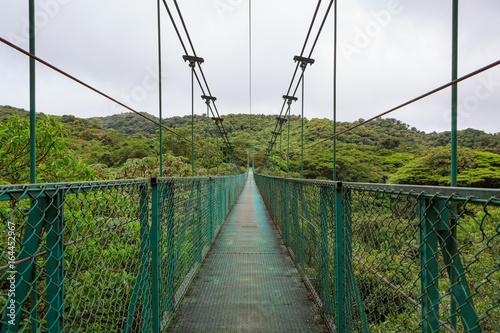 Suspension bridge in rainforest