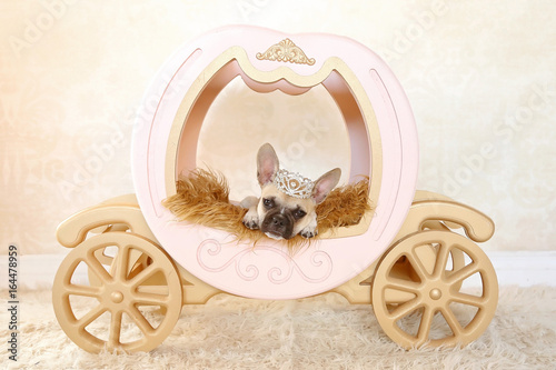 Plakat puppy on carriage with crown