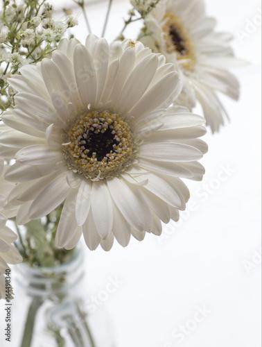 Fotobehang Gerbera Macro of White Gerbera