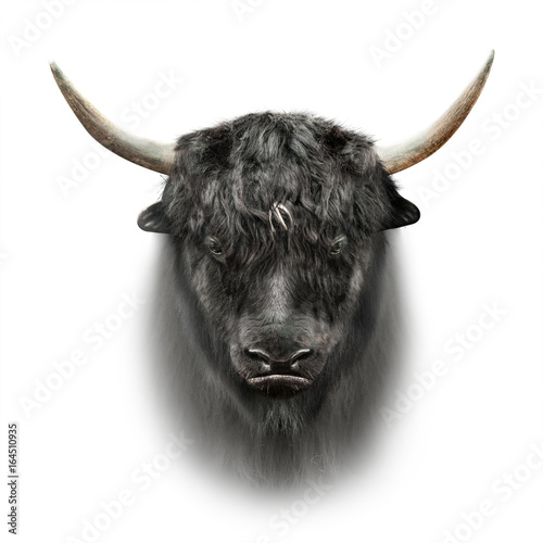 black yak face isolated on white background