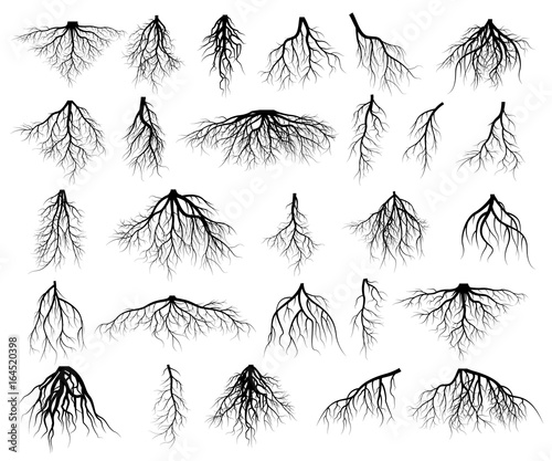 Set of tree roots - 164520398