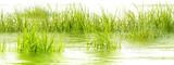 Flora wodna, trawa bagienna