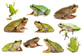 collection of isolated green tree frogs