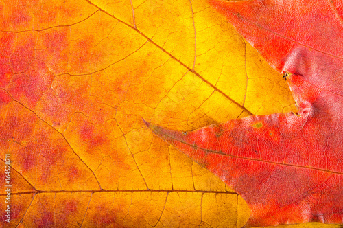 Autumn leaves  very close - 164528711