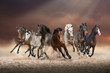Herd of horses run forward on the sand in the dust on evening sky background - 164531768