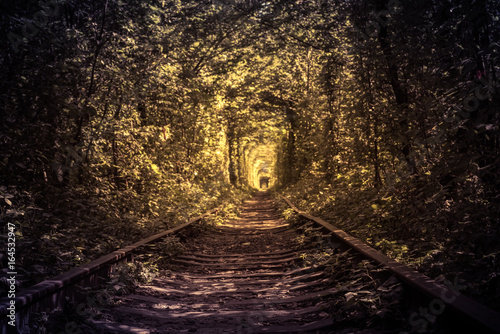 old forest and railway tunel of love