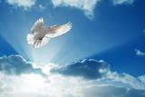 Holy Spirit dove flies in blue sky - 164544748