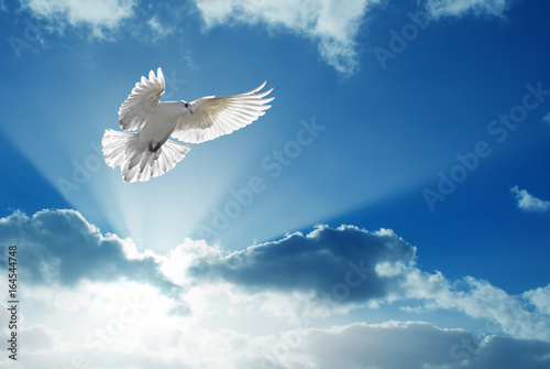 Poster Holy Spirit dove flies in blue sky