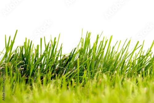 Rasen / grüner Rasen vor hellem Hintergrund