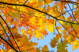 Invitation to dream, silence, relation, timeout, happiness: wonderful day in autumn forest :) - 164556367