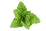 Melissa leaf or lemon balm isolated on white background - 164559554