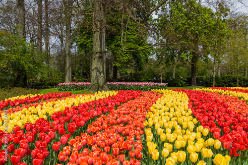 Flowers in garden Keukenhof Netherlands - 164573932