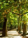 Droga jesieni ... kolorowe liście ...