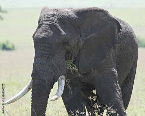 Elephant Lunch 9