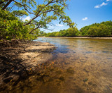 Shallow brackish river and mangrove forest swamp in South Florida Wilderness.