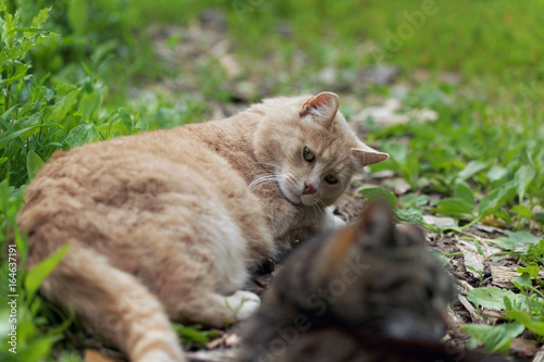 Cute cat outdoors Poster