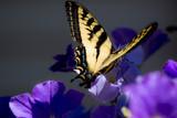 Monarch butterfly on flower. - 164650955