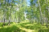birch forest - 164669388