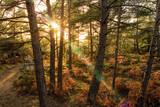 Soleil couchant en Forêt de Fontainebleau