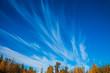 Cirrus clouds in Park
