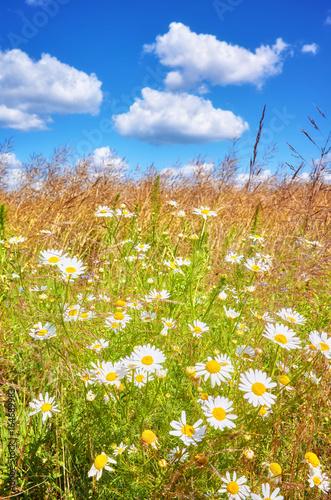 Summer meadow, shallow depth of field.