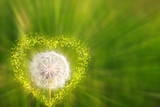 Closeup of dandelion with heart.