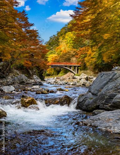 京都 清滝 渡猿橋の紅葉