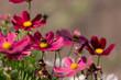 Blütenbetrieb