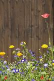 Wildblumen vor Holzwand