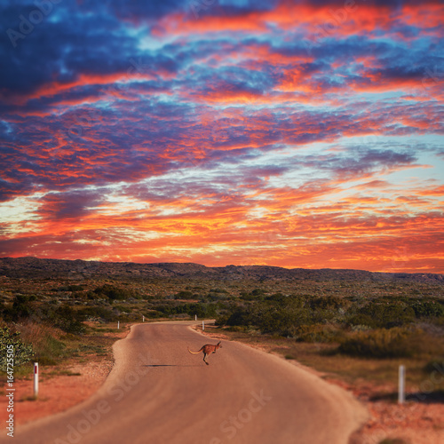 Kangaroo bouncing across road at sunset in Western Australia