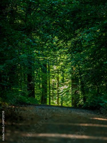 Foto op Canvas Weg in bos Pfad durch den Wald