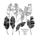 Set of tropical leaves, black silhouettes and outlined images isolated on white background. Vector - 164769575