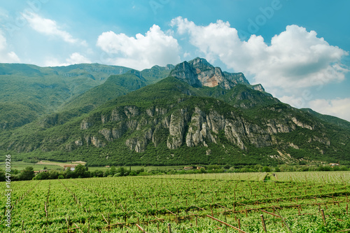 Vineyard field near mountains at daytime. Italy, Europe