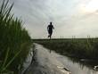Man running in rice fields - 164783351