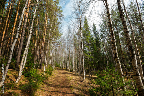 Beautiful spring landscape of Russian Taganay national park with birch and fir trees.