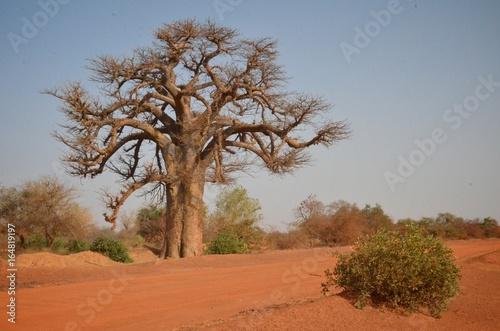 Fotobehang Baobab Baobab in Burkina Faso