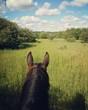 A summer ride. - 164827387