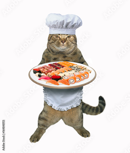 The cat chef cooked sushi and sushi rolls. White background.