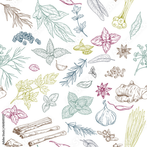 Seamless pattern with hand drawn culinary herbs and spices