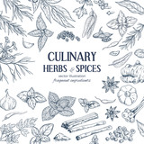 frame composed of hand drawn herbs and spices  - 164849762