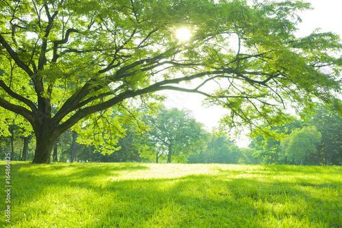 Fotobehang Lime groen 公園 木