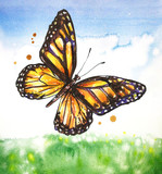 Monarch butterfly. Summer landscape