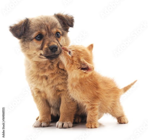 Puppy and kitten. - 164868155