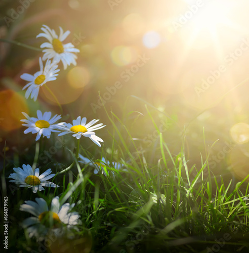 art abstract spring background or summer background with fresh flowers
